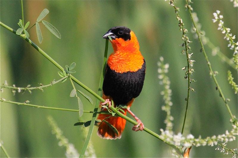 East Orange Focus >> Birds of North America » Focusing on Wildlife