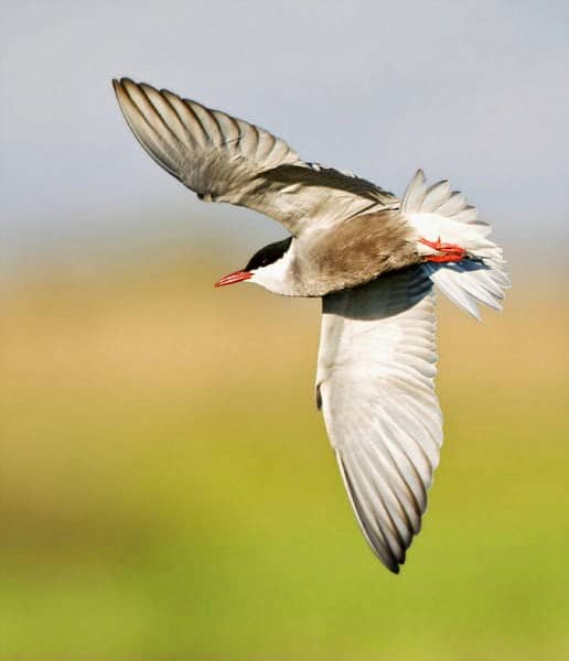 STOP THE ILLEGAL KILLING OF MIGRATING BIRDS IN CYPRUS AND DONATE HERE!
