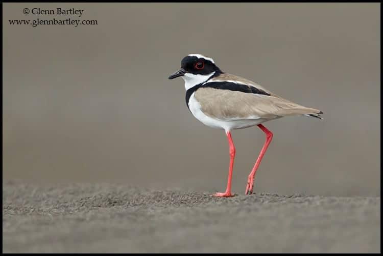 DISCOVER unique wildlife in the © Wildfocus Photo Forum