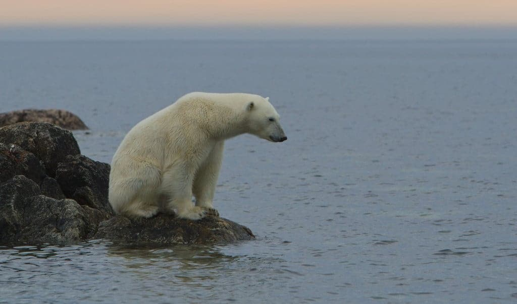NON-PROFIT expedition workshop to see polar bears in Svalbard, 2014