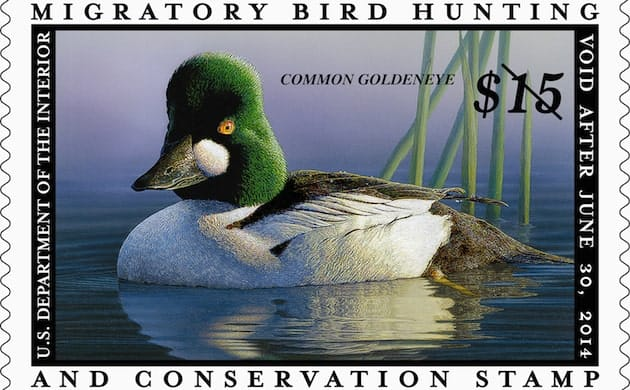 The Duck Stamp and Lack of National Wildlife Refuge Funding