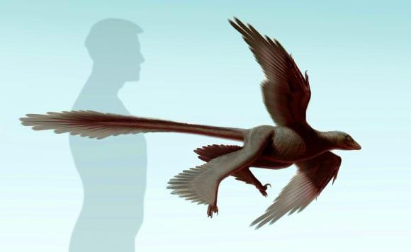 Changyuraptor yangi: New Feathered Dinosaur Discovered in China