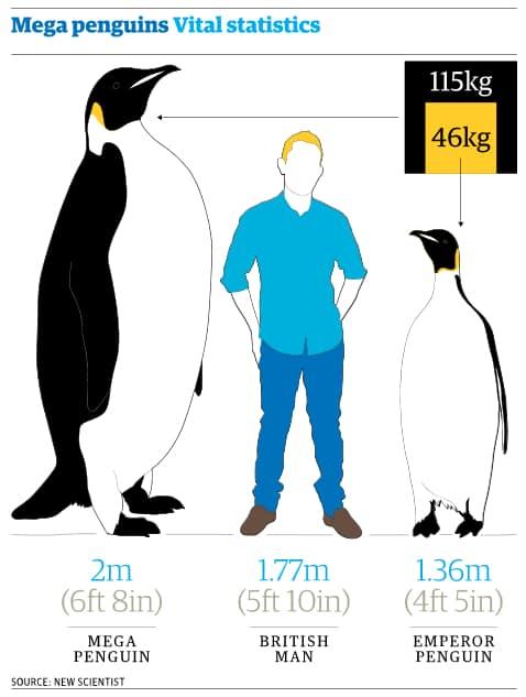 Emperor penguin size comparison - photo#5