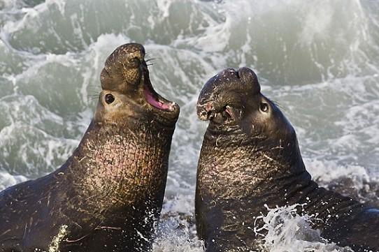 Swine Flu Discovered in Marine Mammals