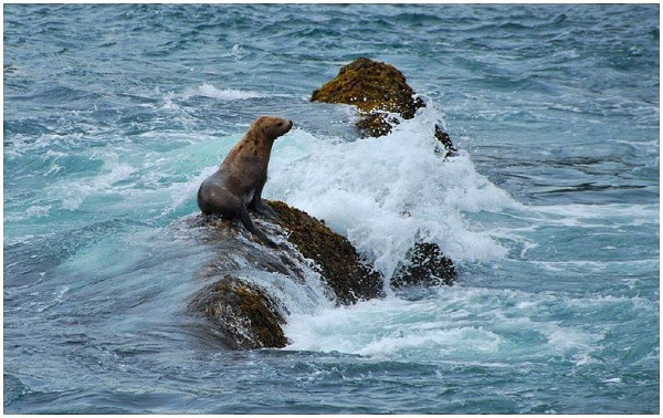 Court Upholds Protections for Steller Sea Lions