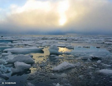Shell Sues Oceana, Others Over Arctic Drilling