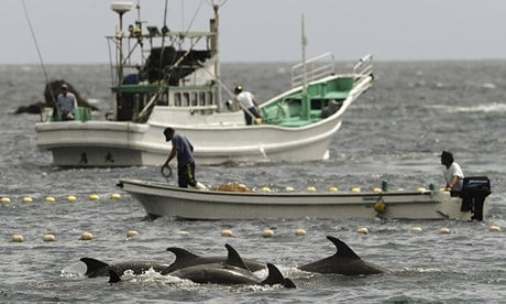 POLL: Should the Dolphin Slaughter in Taiji Cove be stopped?