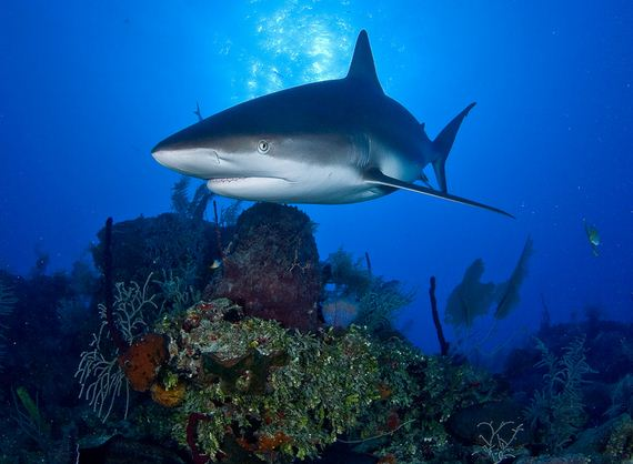 VICTORY: European Union Bans All Shark Finning!