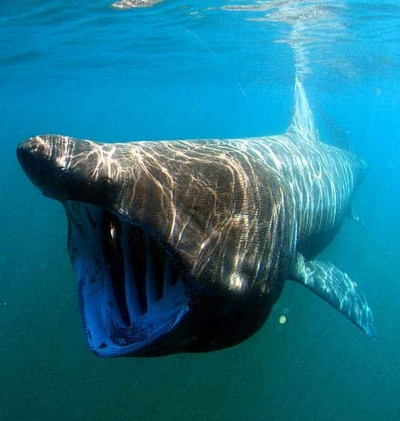 10 Facts You May Not Have Known About Sharks