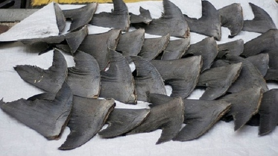 Delaware House Takes Action for Sharks