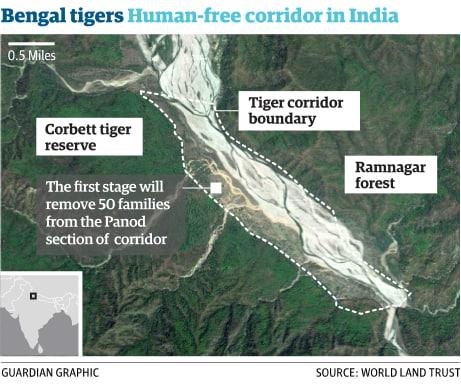 bengal_tigers_corridors