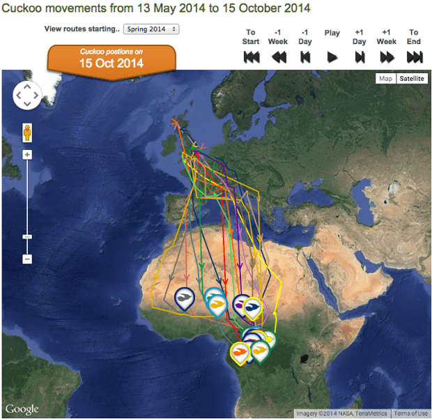 BTO cuckoo-tracking project. Photograph: BTO