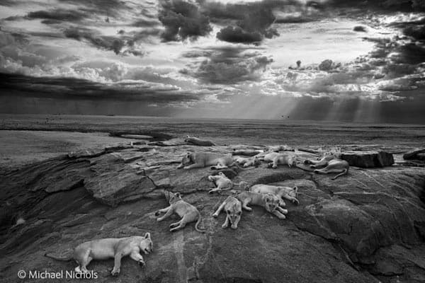 Photos: slumbering lions win top photo prize