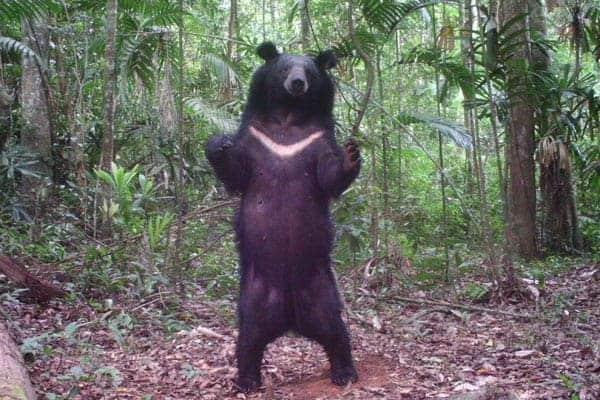 'Guns kill trees too': overhunting raises extinction threat for trees
