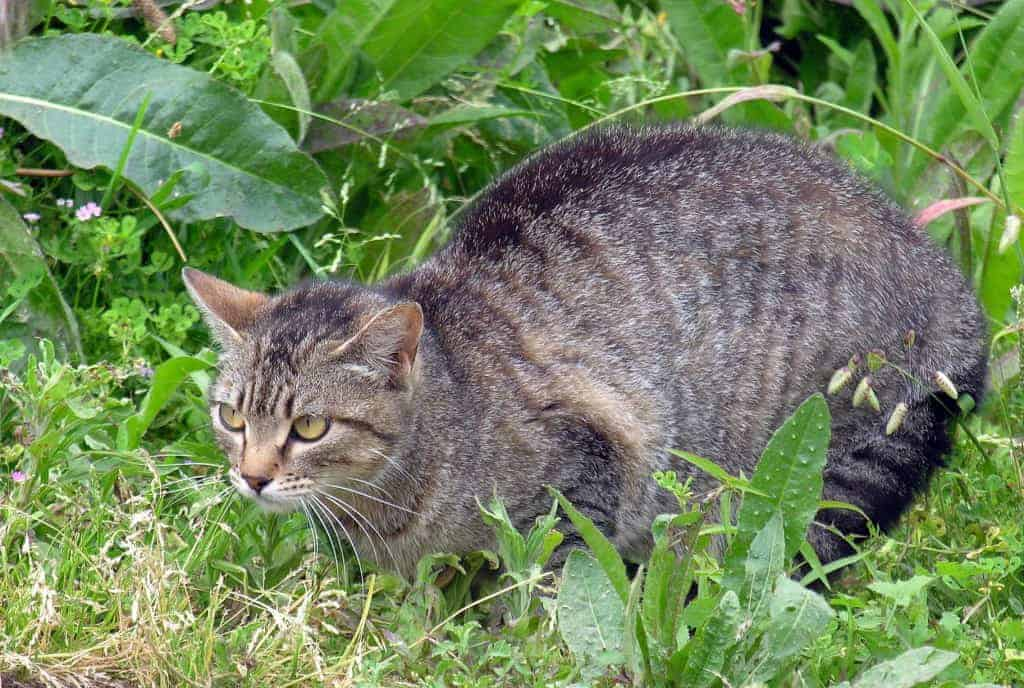 Poll: Should Trap-Neuter-Return (TNR) programs be used to handle feral cats?