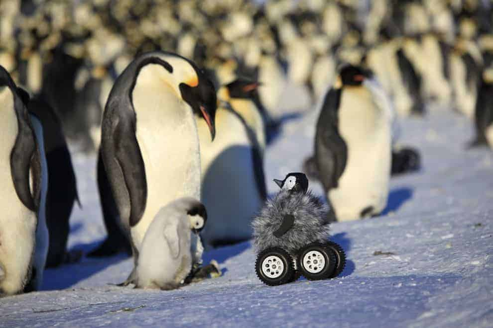 Remote-Control Penguin Rovers Fool Birds, Boost Science