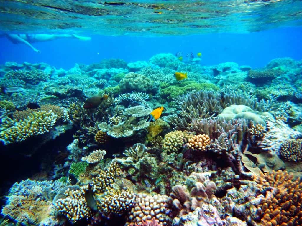 craigslist fiji islands