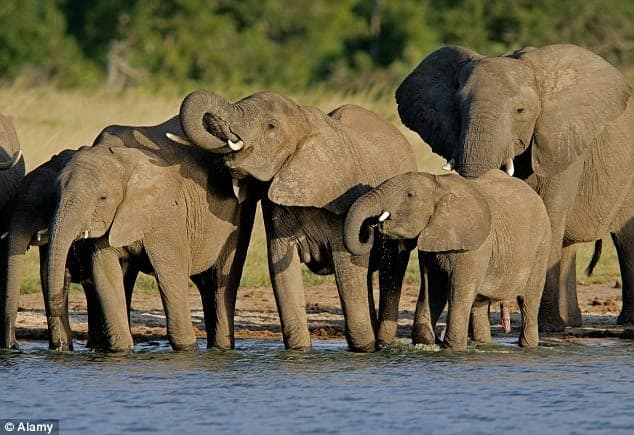 Zimbabwe plans to sell baby elephants to global buyers