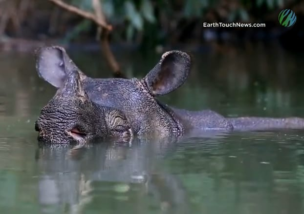 Video: Extraordinary journey to photograph the rarest rhino on Earth