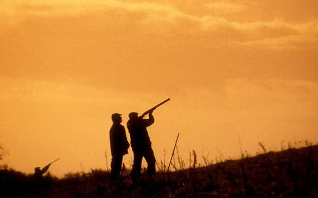 Poll: Do you agree that shooting pheasants is good for the countryside?