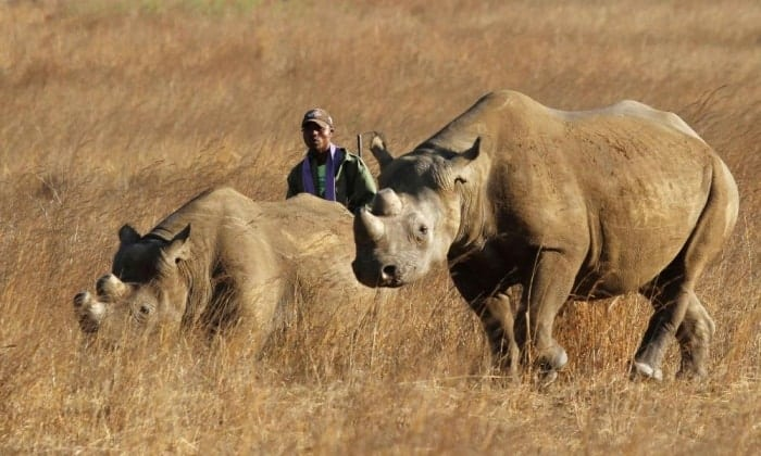Texas man who won hunting auction to be allowed to import black rhino trophy
