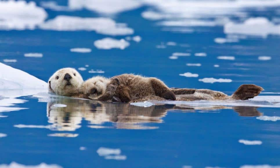 Why would anyone want to shoot a sea otter?