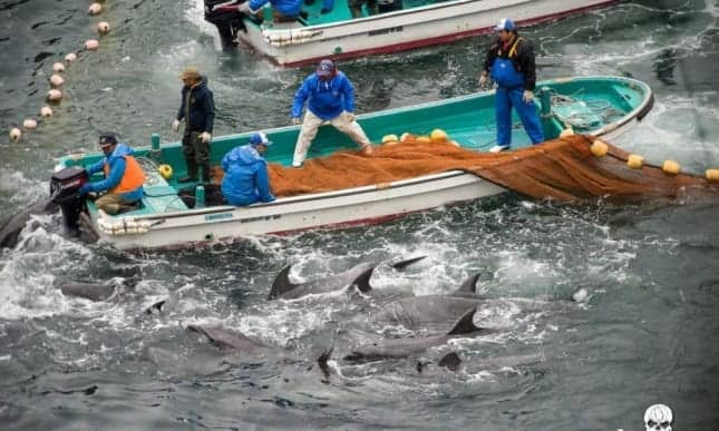 Japanese aquariums vote to stop buying Taiji dolphins