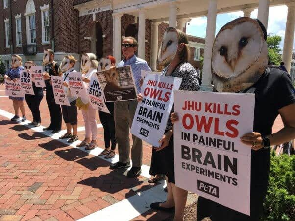 Petition: Johns Hopkins Experimenter Scrambles Barn Owls' Brains—Help Stop Him