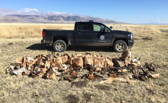California Man Killed Over 135 Birds in State's Worst Raptor Poaching Case