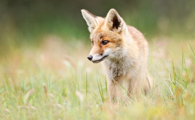 POLL: Should Wildlife Killing Contests be Banned?