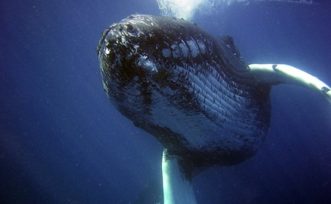 Fisherman Risks His Life to Save a Humpback Whale