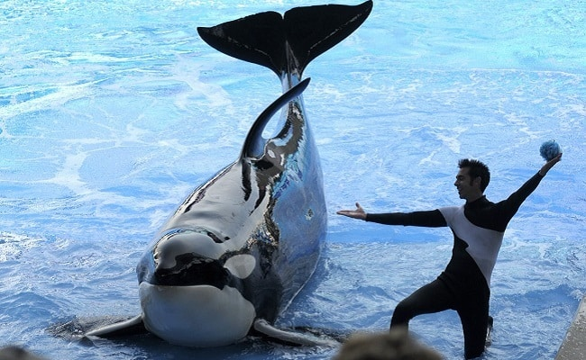 POLL: Should legislation be passed to prohibit the keeping of Orcas in captivity?