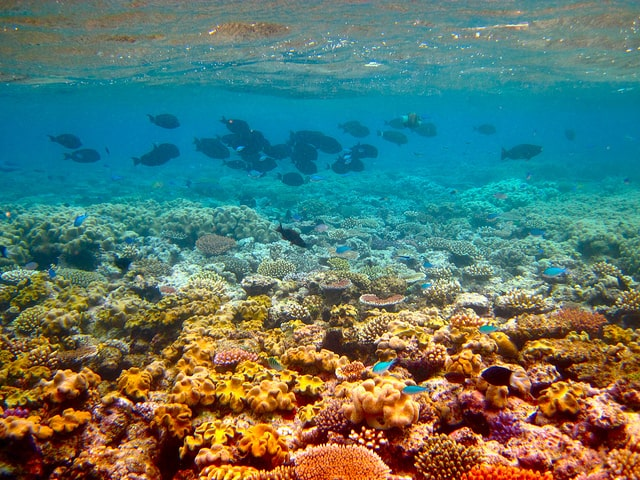 What can you do to help save the great barrier reef?