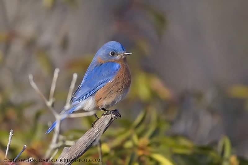 A Bird Sanctuary In Killingworth, CT Pt. I