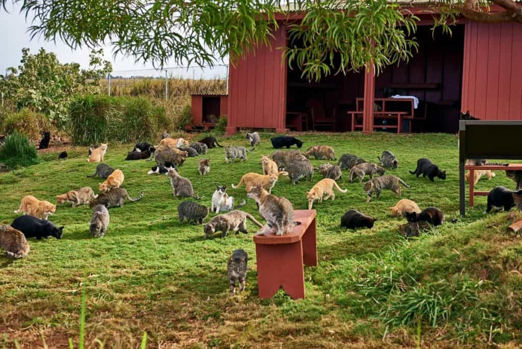 POLL: Should Hawaii's feral cats be killed to protect indigenous species?
