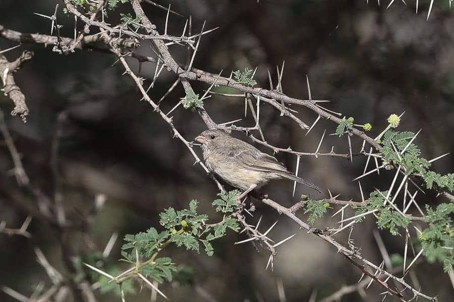 Plenty of endemic bird species in Wadi Thee Gazelle – Taif