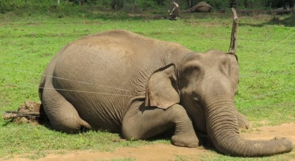 Seven elephants found dead as Sri Lanka's human-wildlife conflict escalates
