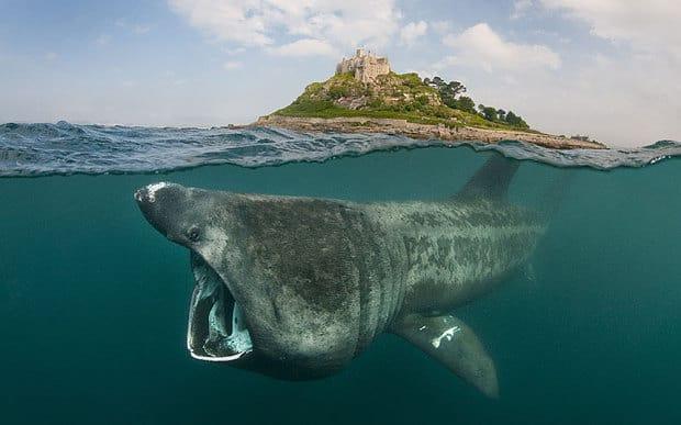 Global marine populations slashed by half since 1970