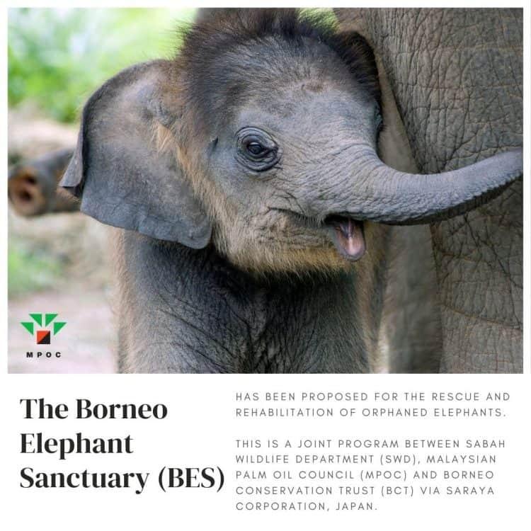 Borneo Elephant Sanctuary