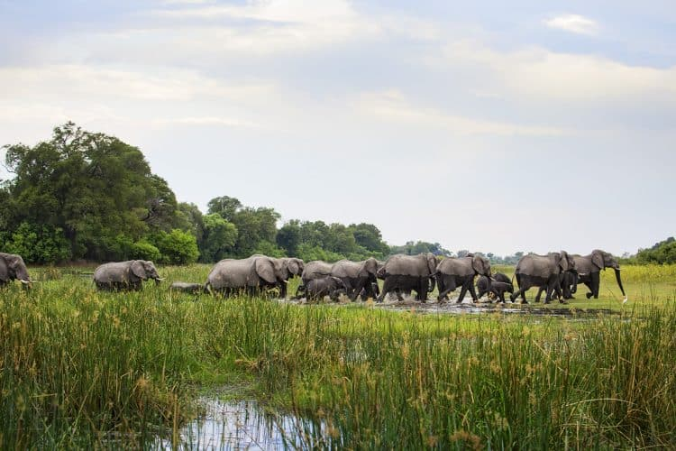 POLL: Should the culling of elephants in Botswana be allowed?