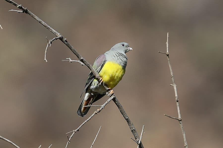 African birds at the bottom of the Raydah Escarpment – Abha