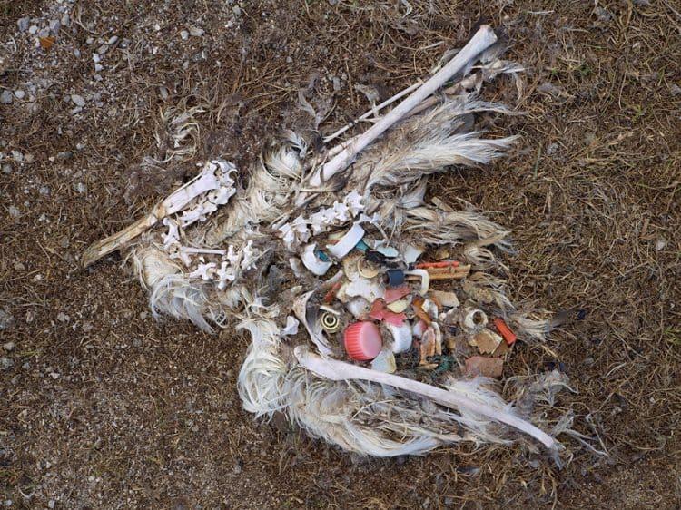 Dead Albatross by Chris Jordan