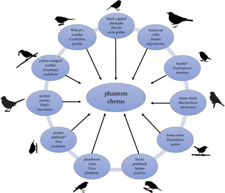 "The authors call it a ""phantom chorus."" (See chorus ""members"" in image above.)"