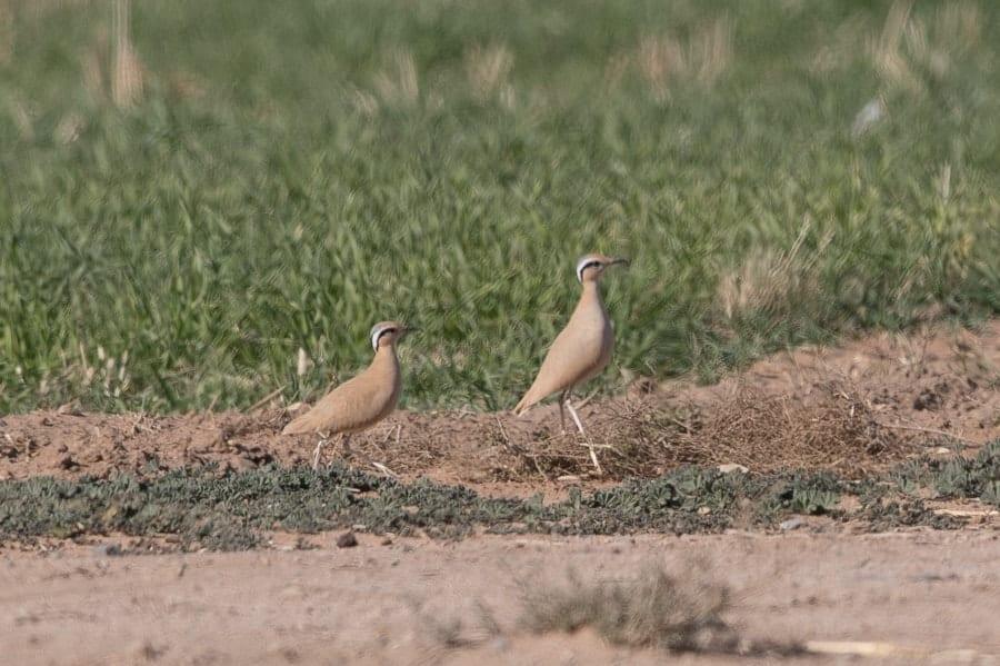 Winter Birds – Tabuk