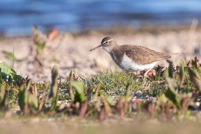 Pennington Marsh – 30th April and 2nd May