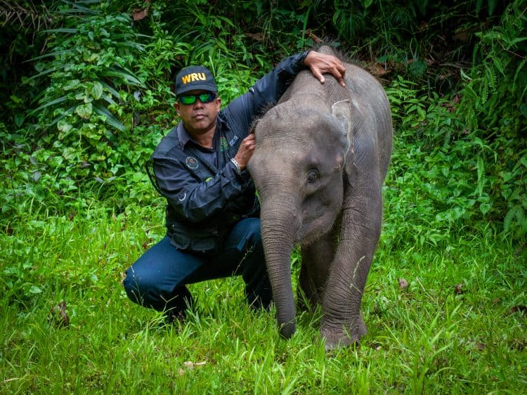 A dedicated team of Malaysian rangers and veterinarians is part of global movement to rescue and preserve rainforest species