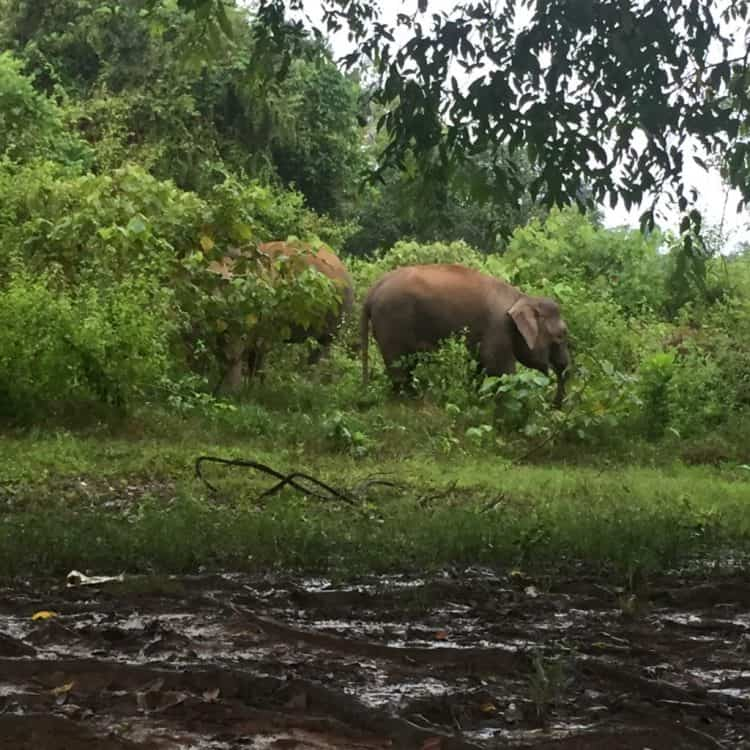 From Elephant Conflict to Coexistence