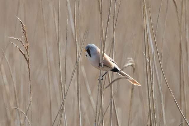 Pennington Marsh – 23rd March