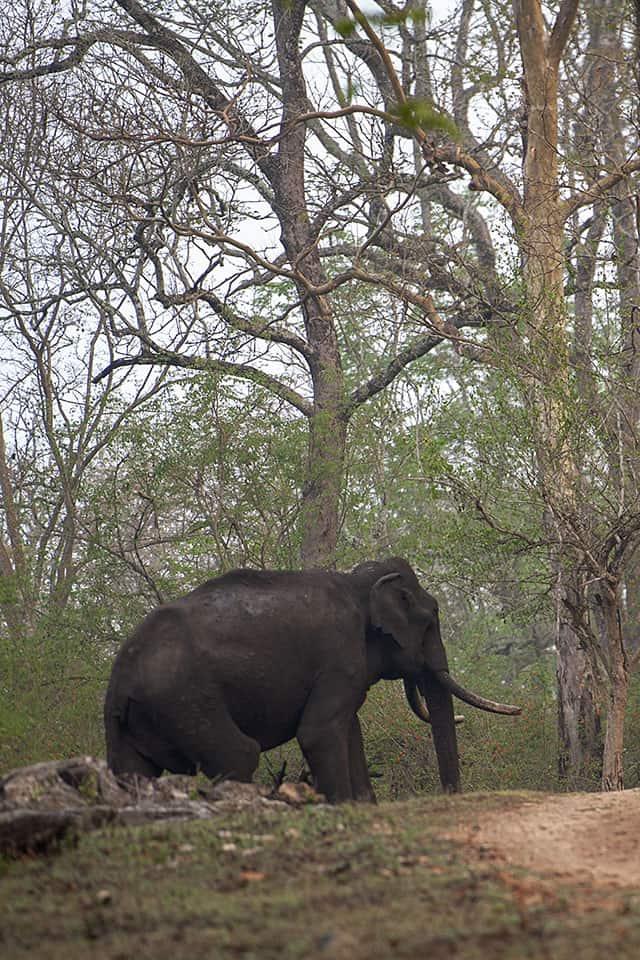 Morning Safari in Kabini