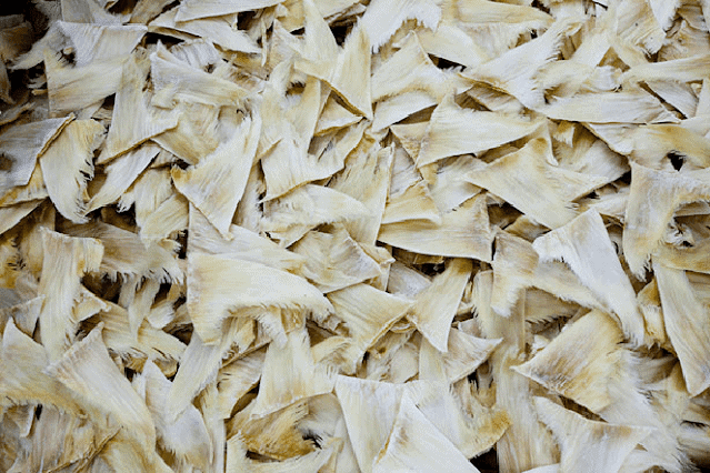 New DNA tracking techniques are revealing a greater number of threatened and coastal sharks from stockpiles of intact shark and processed fins (pictured). Image credit: Paul Hilton.